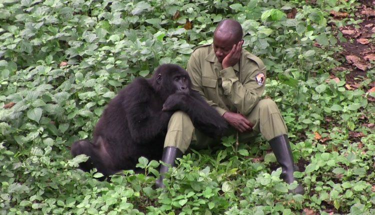 Senkwekwe Gorilla Center