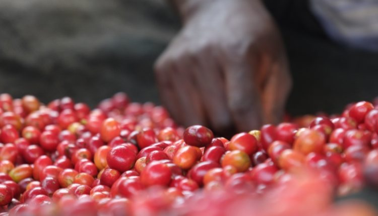 Virunga Coffee